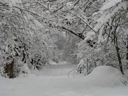 Sărberile zăpezii la Băişoara